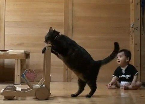 「こうするニャ!」赤ちゃんに遊び方を指導してあげる猫