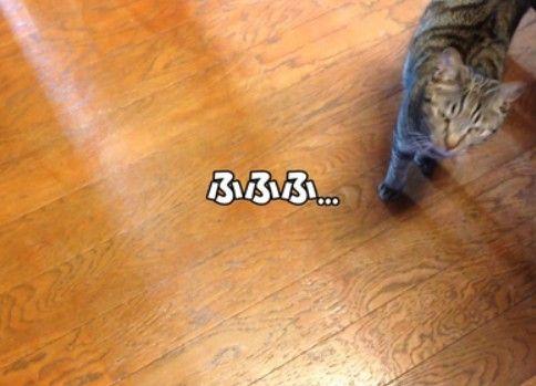 猫のスリスリを全力で避けてみる