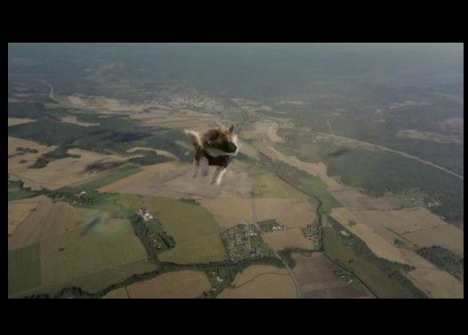 猫がパラシュートで空を飛ぶ衝撃映像