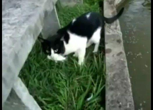 目にも止まらぬ早業で魚を捕まえる猫