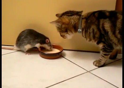 ネズミvsネコ