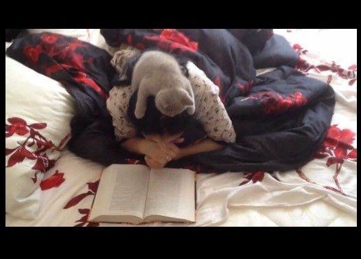 本を読んでたら猫が頭に乗ってきた