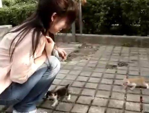 仔猫にモテすぎる女性
