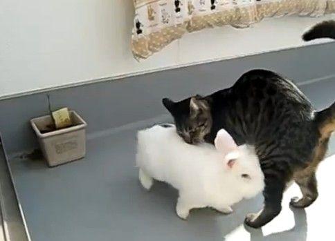 追うウサギ、逃げるネコ