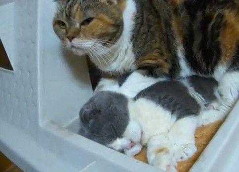 猫のマッサージ屋さんに行ってみた