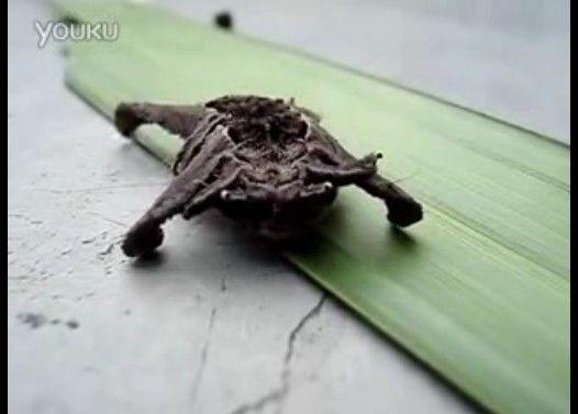 未知の生物
