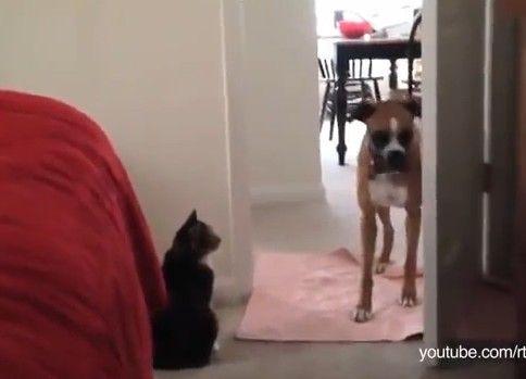 【在宅にゃくざ】俺の前通るつもり?あっ〜!?