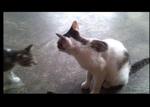 親猫の自己主張が激しいので撮ってみた