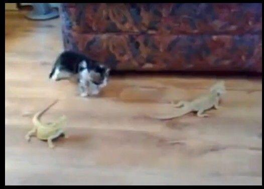 子猫VS二匹のトカゲ 世紀の対決!はたして勝敗は?