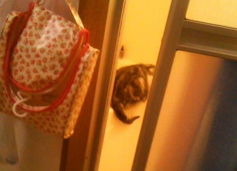 盗撮に気づいた猫のにゃにゃにゃにゃにゃにゃにゃーんがかわいかった