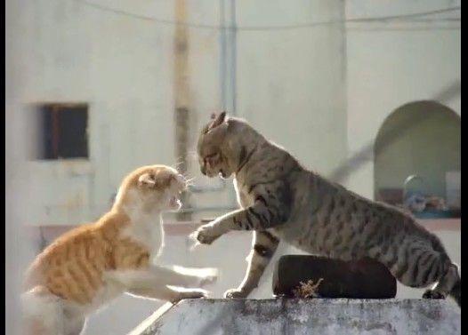 【猫の罵り合い】おらおらvsぎゃあああ