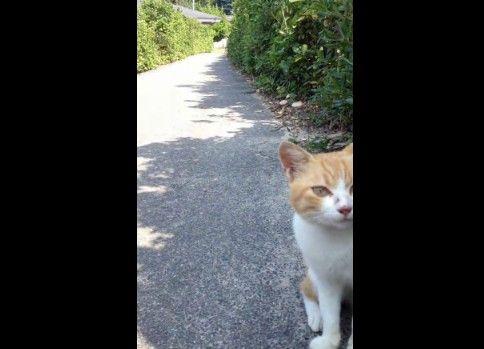 追っかけてくる猫