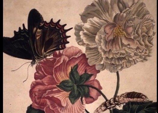 虫&爬虫類等注意:スリナム産昆虫変態図譜