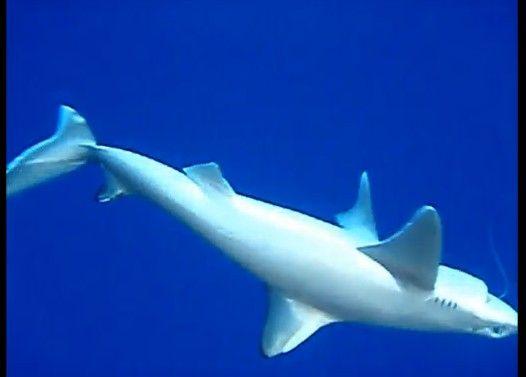 サメを釣ってみた