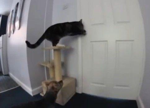 犬を助ける猫さん