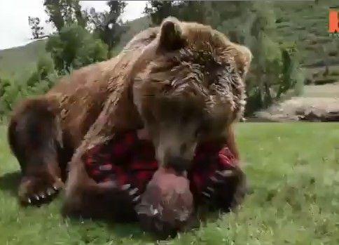 クマさんと仲良し