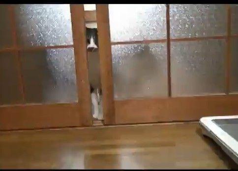 無理やり入ってくる猫たち
