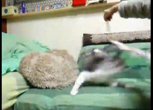 目を回してフェードアウトする猫