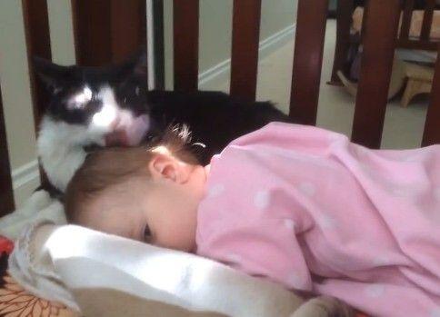 猫舐める→赤さん起きる→やめる→赤さん寝る→猫舐める→