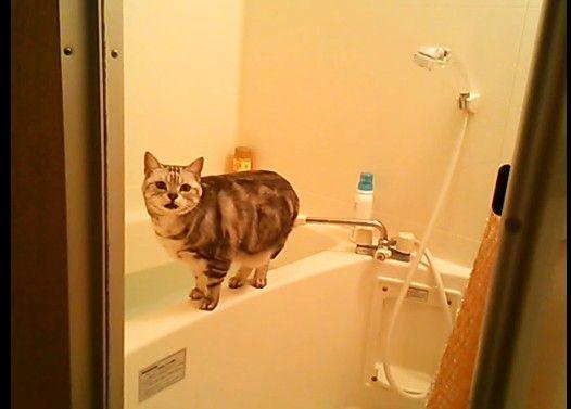 盗撮に気づいた猫がかわいかった