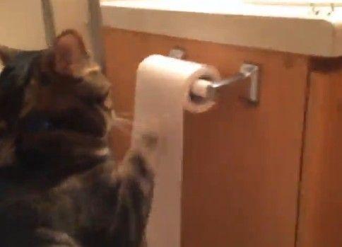 猫がトイレットペーパーでイリュージョン