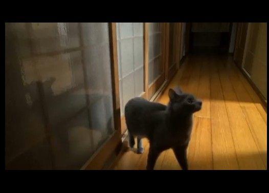 入れてよー!ドアを高速ノックする猫