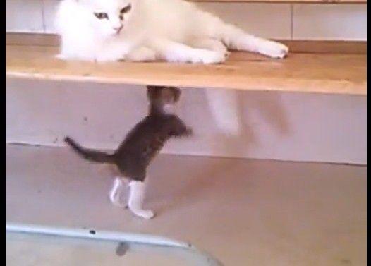 ランちゃん流子育て法★シッポを追いかけ回す子猫がかわいいです!