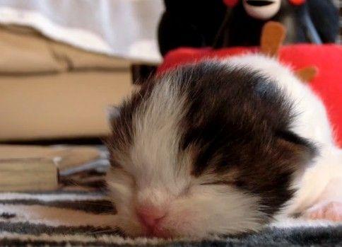 【リア獣】 鳴いた子猫が眠るまで 【猫万歳】