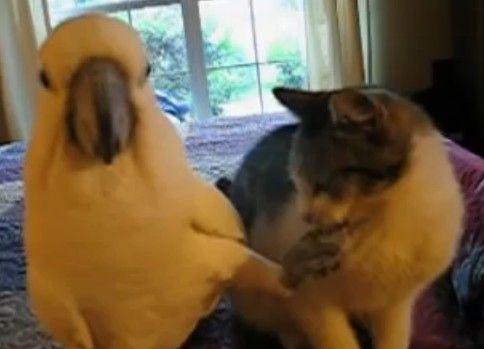 猫の顔を撫でるオウム