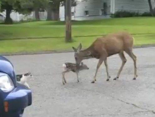 鹿が犬と猫にブチ切れる動画