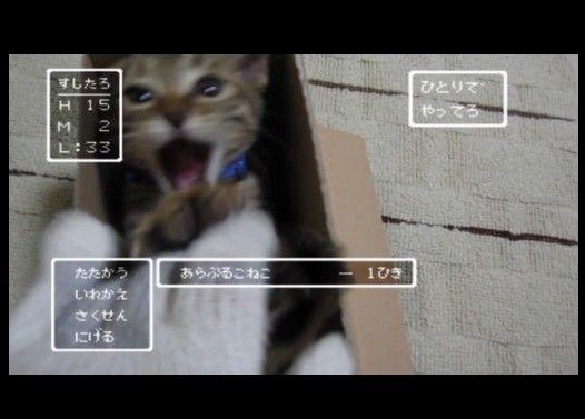 ドラクエな子猫