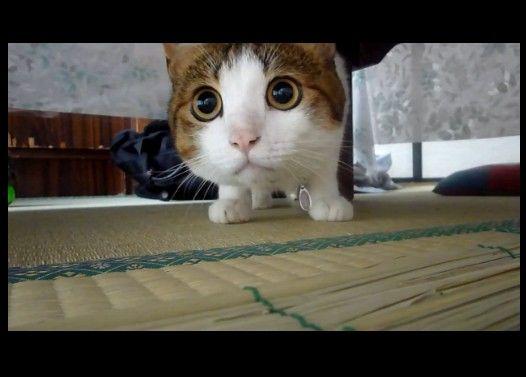 ずっと一点を見つめる猫