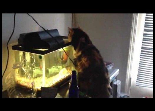 水槽の魚に噛み付かれたネコの災難