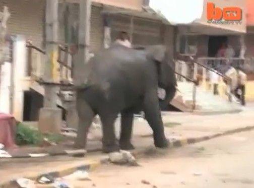 インドでゾウが大暴れ!