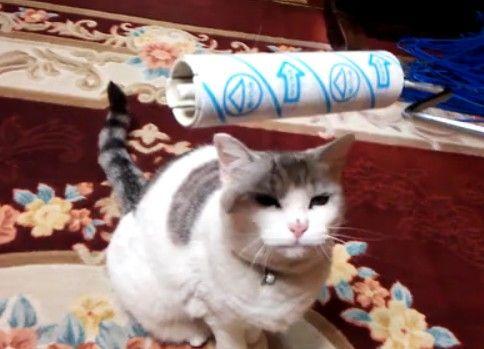 ころころされるのが好きな猫