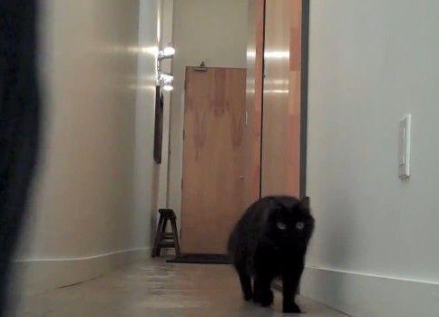 ネコの「!?」な瞬間