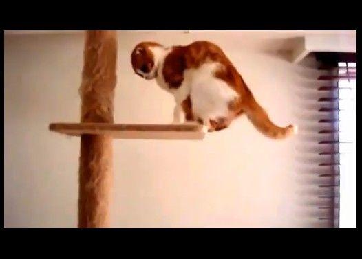 降り方が愉快な猫