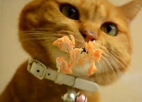 おやつを食べる猫を下から見てみた