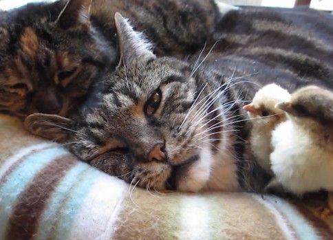 猫とウズラ5