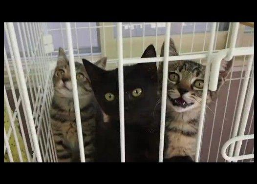 【ニャイダーハウス】子猫入れかわり立ちかわり