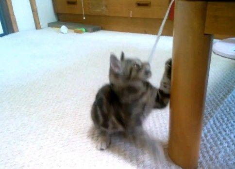 子猫ちゃんの高速猫パンチ連打