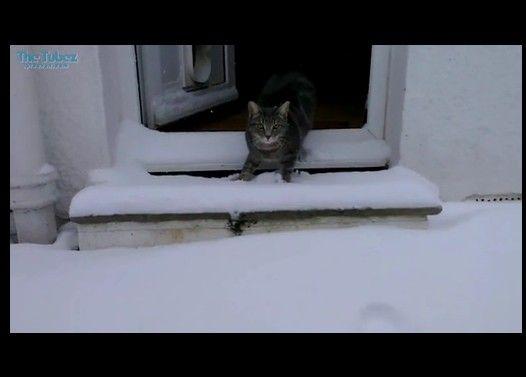 初めて雪を目の当たりにした猫が面白可愛い