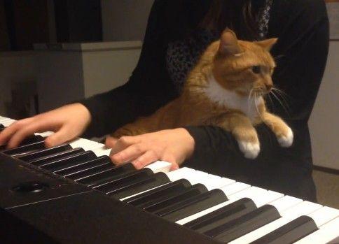 ノリノリなピアノ演奏に悠然と割り込んでくるネコ