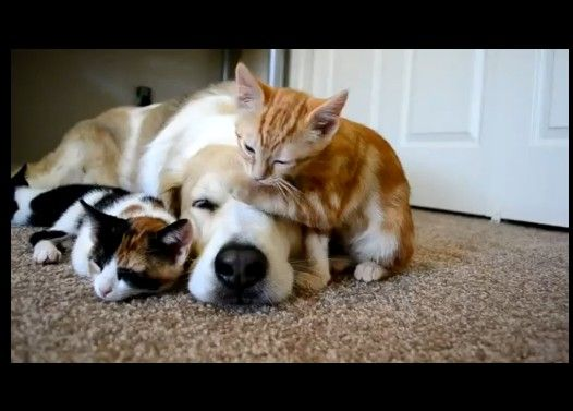 A Dog with Cats