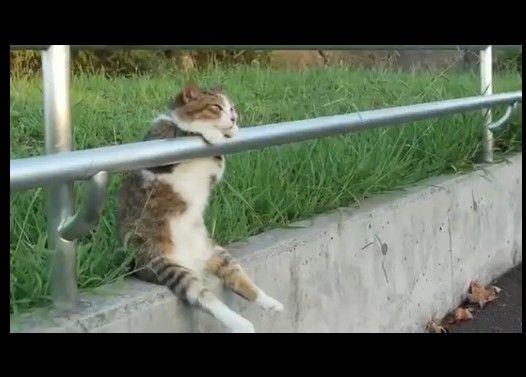 腰を掛けて夕陽を見る猫