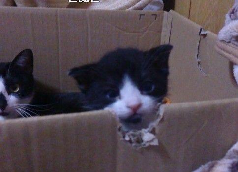 【猫】進撃のこぬこ