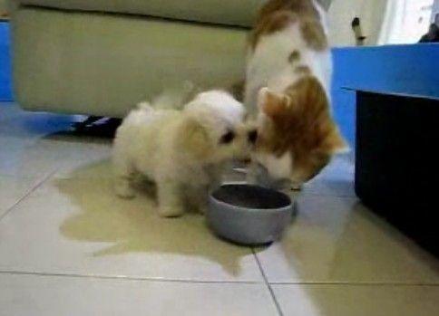 餌を食べれず猫耳を食べる子犬