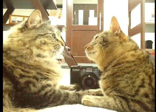 向かい合う猫を舐める事に、限界を感じた時