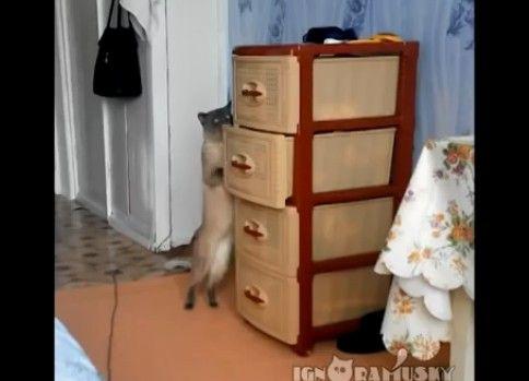 引き出しを開ける猫ちゃん