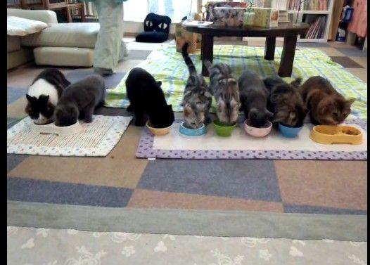 整列した猫